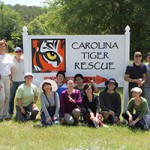 Helping the Carolina Tiger Rescue